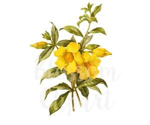 botanical, flower illustration, and vintage flower image