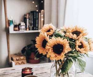 sunflower, flowers, and home image
