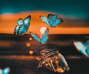 butterflies, lights, and love image