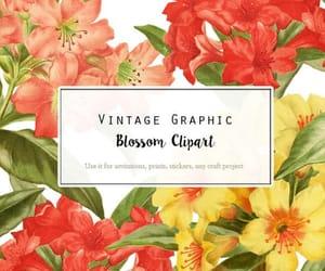 etsy, illustration, and vintage floral image