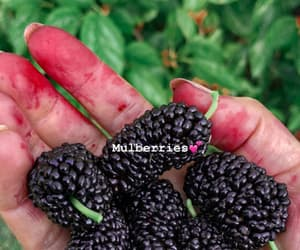 fruit, nf, and mulberry image