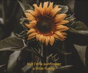 song, sunflower, and Lyrics image