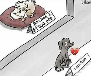adopt, animals, and Animales image