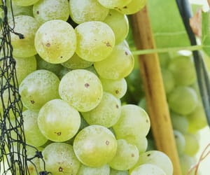 europe, grapes, and nature image
