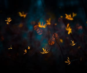 autumn, bokeh, and Darkness image
