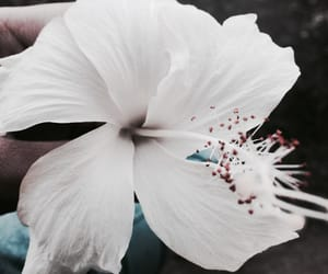 faded, flower, and white image