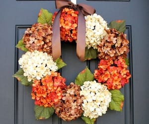 autumn colors and hydrangea image