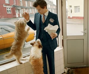 harry + gucci + doggies = heaven