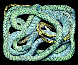 photography, snakes, and snake image
