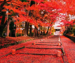 autumn, japan, and landscape image