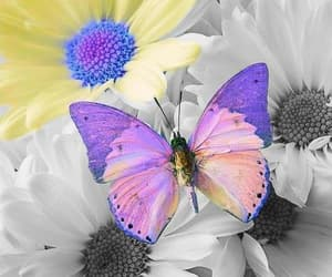 flor and mariposas image