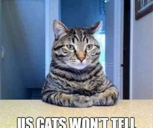 funny cats dogs image