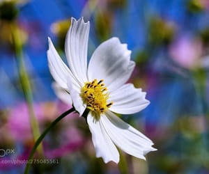 bloom, white flower, and blossom image