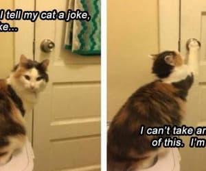 cute funny cat image