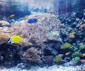 beautiful, budapest, and fish image