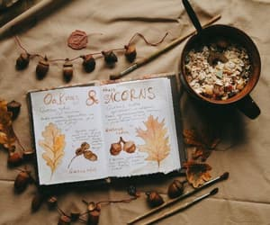 autumn, fall, and cosy image