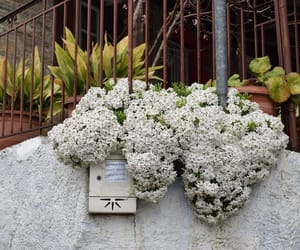 flowers, Greece, and winter image