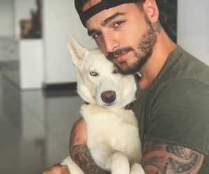 maluma, dog, and boy image