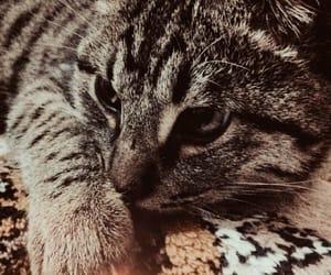 cat love image