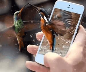 art, bird, and birds image