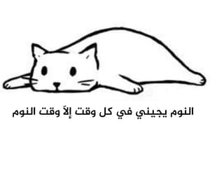 arabic, cat, and me image