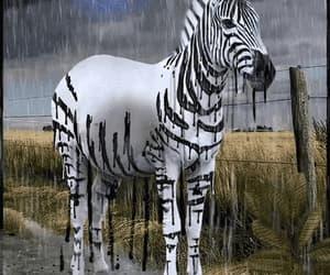 animal, gif, and stripes image