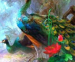 animal, beauty, and peacocks image