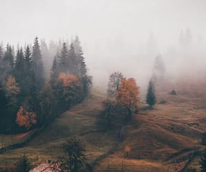 fall and nature image
