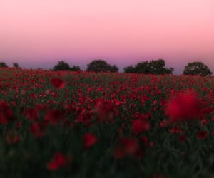 flowers, landscape, and pink image