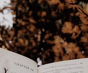 autumn, books, and brown image
