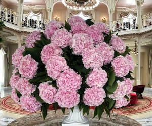 flowers, hydrangeas, and pink image