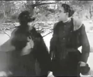 gif, harold lloyd, and a sammy in siberia image