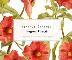 print, vintage flower, and wedding clipart image