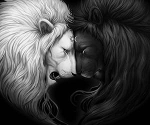 lion, black, and white image