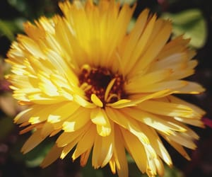 aesthetic, close up, and flower image