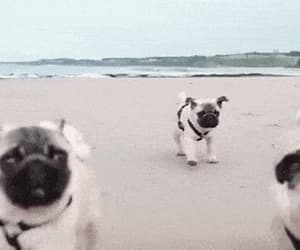 puppy and gif image