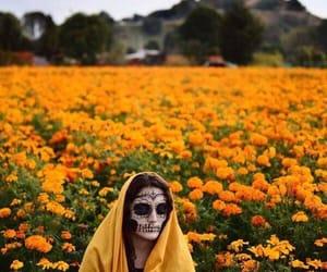 autumnal, cultura, and dia de muertos image