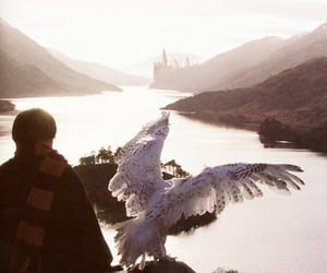 hedwig, harrypotter, and owl image