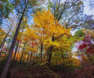 autumn colors, canopy, and colorful image