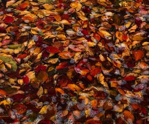 autumn colors, flickr, and puddle image