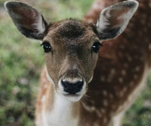 deer, photography, and sweet image