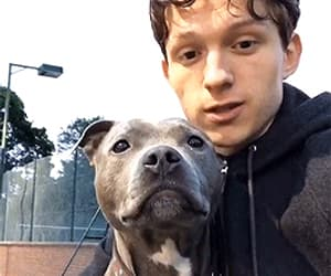 dog, tom holland, and cute image