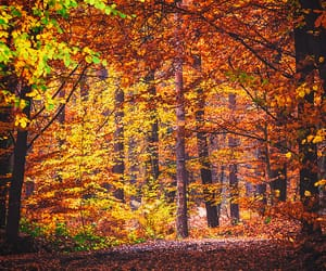 autumn colors, colorful, and flickr image