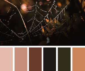 aesthetics, autumn, and color image