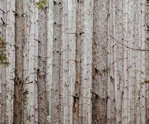 adventure, autumn, and blog image