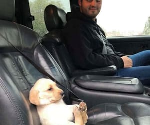 car, perrito, and puppy image