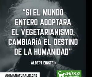 Albert Einstein, vegetarianism, and vegan image