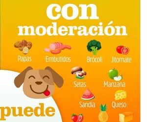 comida, perros, and perritos image