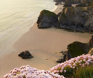 beach, flowers, and nature image