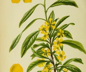 botany, shrubs, and botanical illustration image